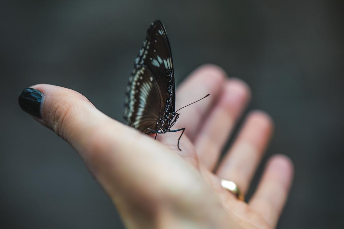 We slaan graag de vleugels uit, maar ook het verlangen naar geborgenheid zit diep in ons.